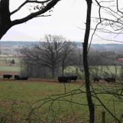Vallei van de Zwarte Beek: Laren